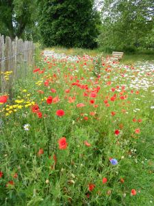 The wild flower meadow at Cavell this summer