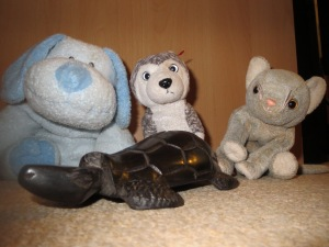Tortoise/turtle and toys