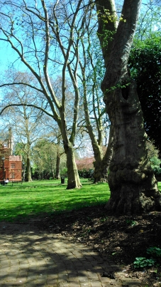 Trees in London park